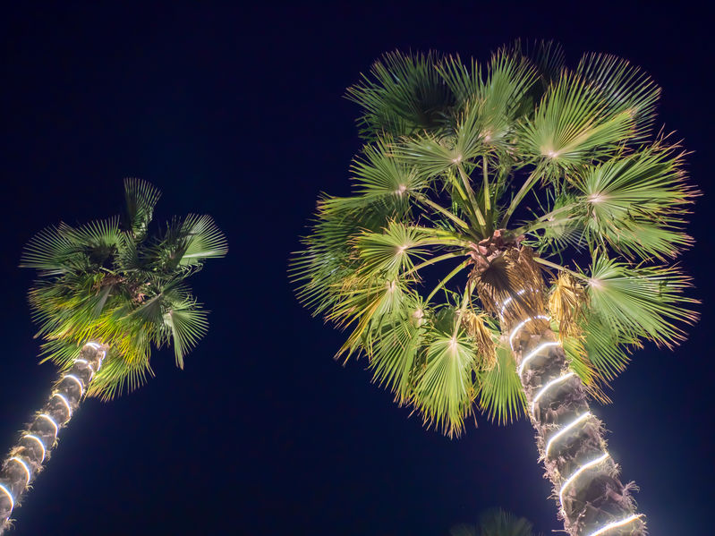 Naples Florida Christmas Lighting Installers